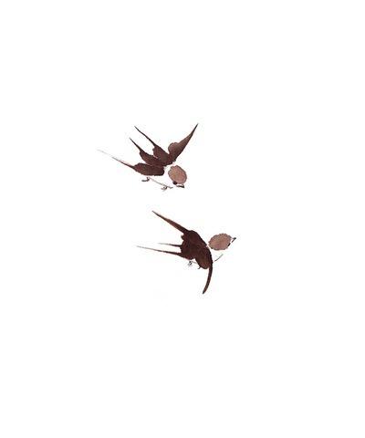 Talia LeHavi - Swallow IV