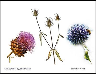 John Darnell - Late Summer
